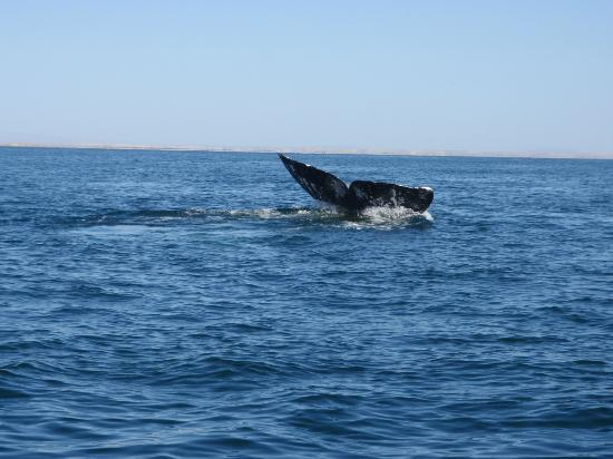 Elias Calles, Mexico: Whale Watching Right Out Front of Property
