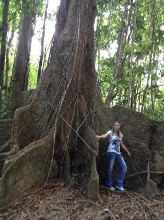 Heritage & Interpretive Tours: my favorite tree