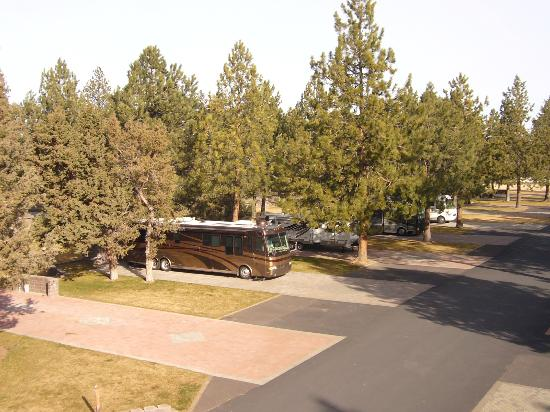 Crown Villa RV Resort: Mature Landscaping, Trees & Grass