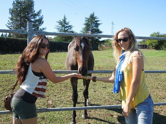 Castello di Monteliscai: Even friendly animals. =)