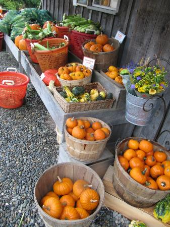 Killdeer Farm Stand: Fall favorites