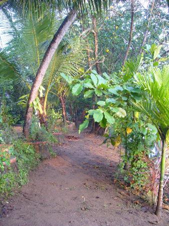 Big Banana Island Retreat: jardin