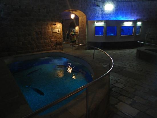 Aquarium Picture Of Dubrovnik Sea Aquarium Dubrovnik