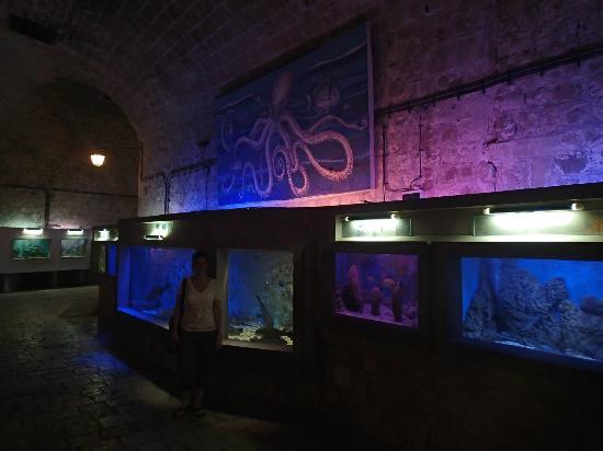 Dubrovnik Aquarium : ... Dubrovnik - Photo de Dubrovnik Sea Aquarium, Dubrovnik - TripAdvisor