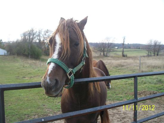 Hillview Haven B&B: Hero, one of Irene's horses.