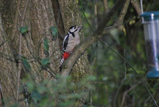 Pulborough Brooks RSPB: lovely woodpecker
