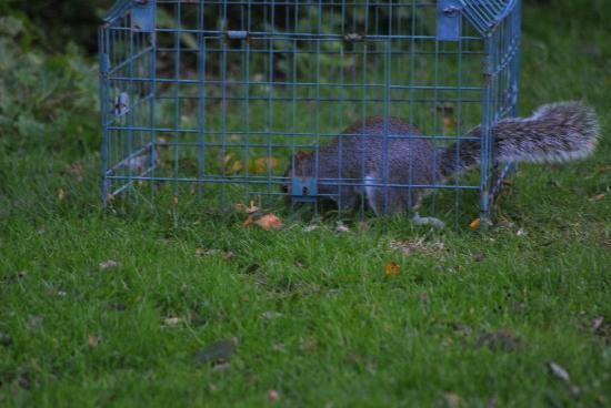 Pulborough Brooks RSPB: sneeky grab of food