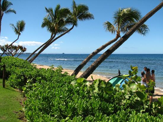 Marriott's Maui Ocean Club  - Lahaina & Napili Towers: Even the palm trees relax at Marriott!