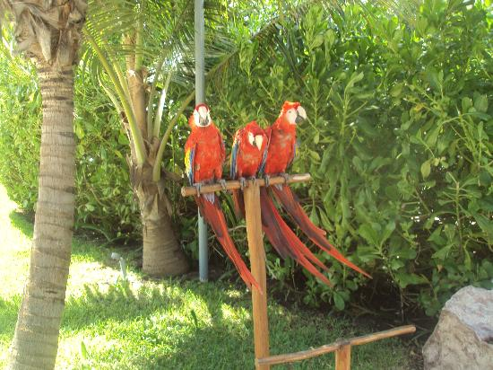 Live Aqua Beach Resort Cancun: The Mackaws (sp?)