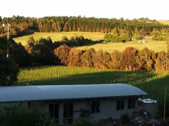 Gisborne Peak Winery Cottages : Sunrise
