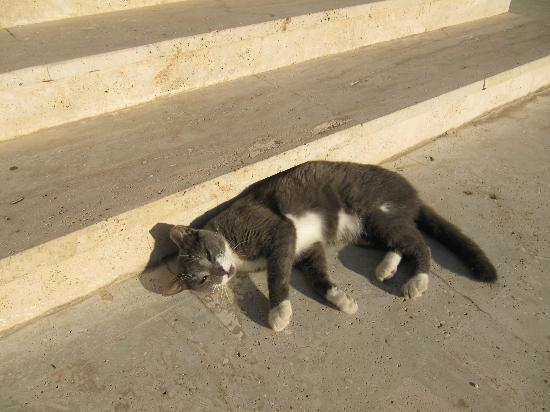 Villa Konak Hotel: 人なつっこい猫。