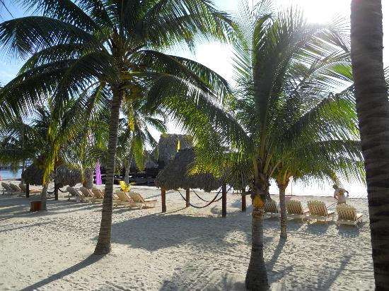 Ramon's Village Resort: Coconut trees on Beach