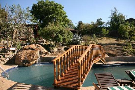 Lobo Wildlife Lodge : swimming pool on the observing platform
