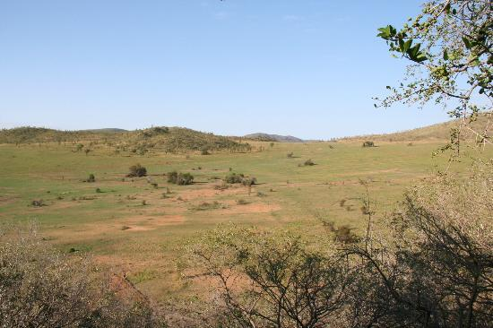 Tshukudu Bush Lodge: View from Accomodation