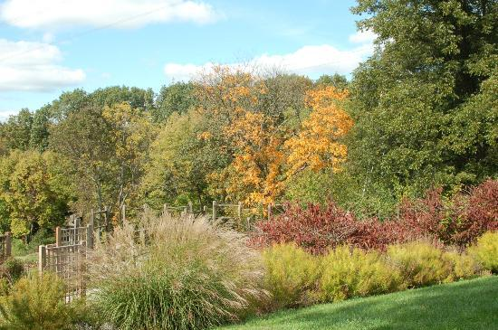 Mount Airy Forest: Fall colors at Mt Airy