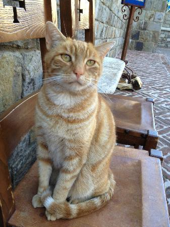 Castello di Amorosa: Castle Cat