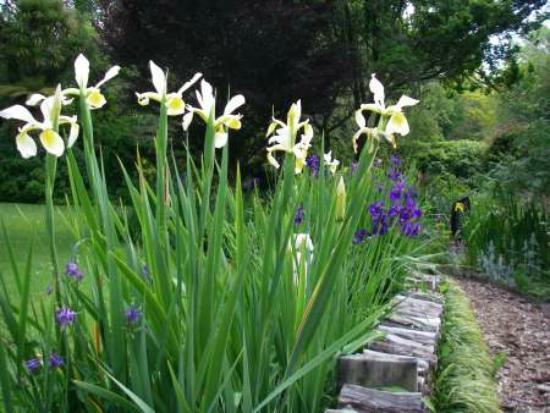 Te Popo Gardens: Flowers