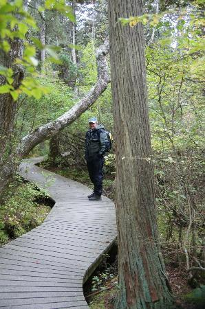 White Cedar Swamp: The boardwalk around the swamp
