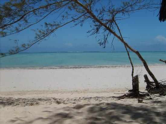 Ndame Beach Lodge Zanzibar: A picture taken from my lounger at Ndame Beach Resort