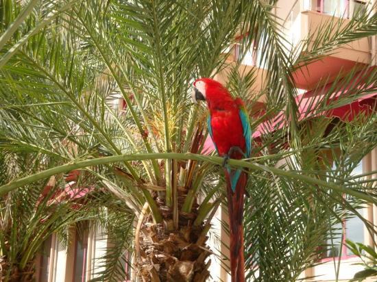 Hotel Riu Kaya Belek: Hotel Parrot