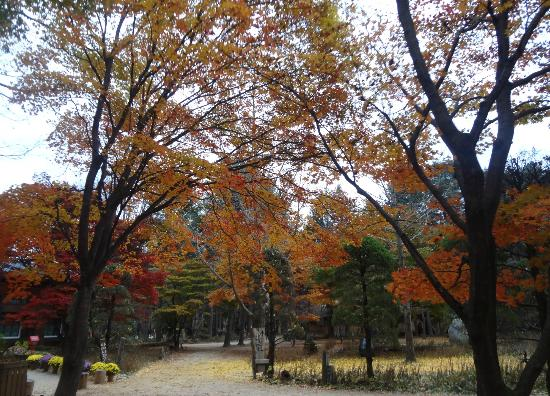 Nami Island: colors of the autumn