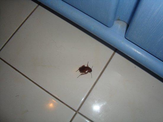 cockroach in villa smeralda