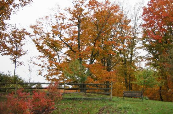 Hollister Hill Farm B&B: Fall colours in the garden