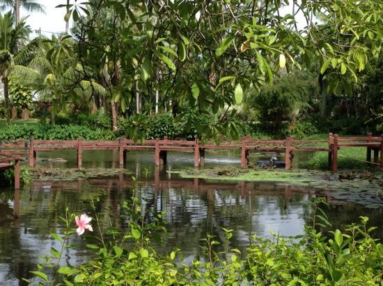 Marriott's Phuket Beach Club: pond near the North Wing.