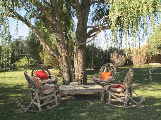 Casa Gallina: Seating beneath the Willow