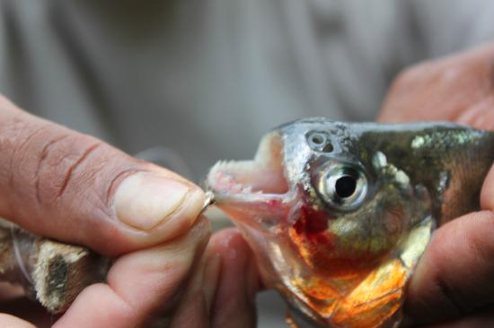 Sani Lodge: piranha fishing