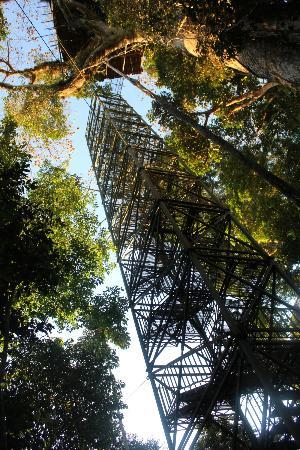 Sani Lodge: canopy tower