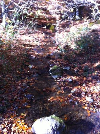 Selva de Irati: Irati en otoño