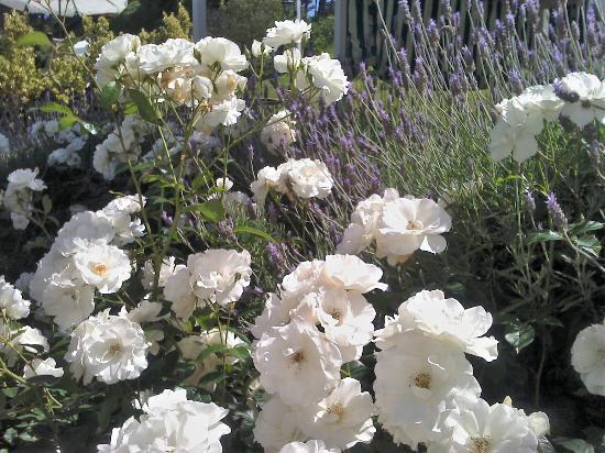 La Vieja Hosteria: Flores del jardin