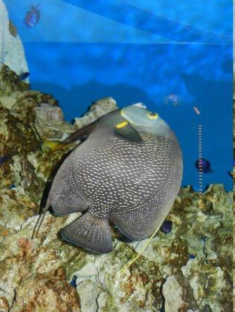 Newport Aquarium: aquarium display