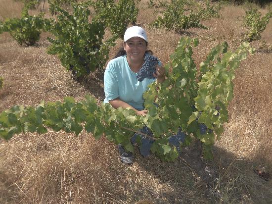 La Posada del Tietar: Corté mis propias uvas