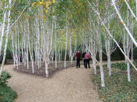 Anglesey Abbey: The birch grove