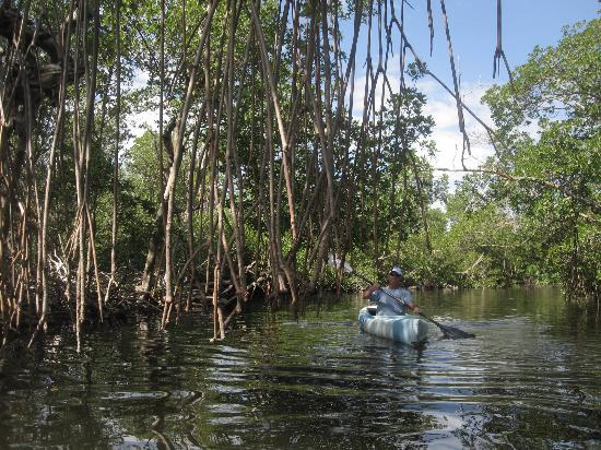 Tarpon Bay Explorers: Kayaking through the mangrove forest