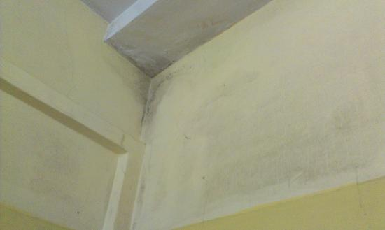 Dasharath Hotel: Damp walls