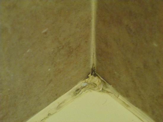1st Interstate Motel : Mold in shower