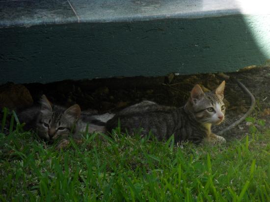 Grand Palladium Colonial Resort & Spa : Two Random Kittens