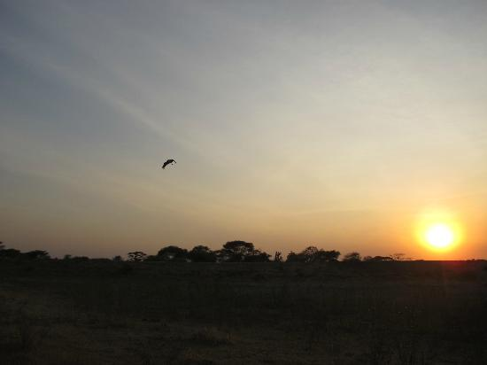 Manyara Ranch Conservancy: sunset