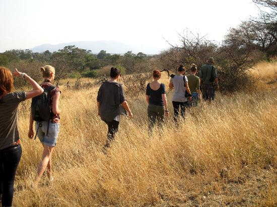 Manyara Ranch Conservancy: walking safari