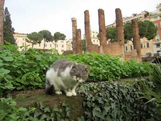 Largo di Torre Argentina : I gatti di Roma/Torre Argentina