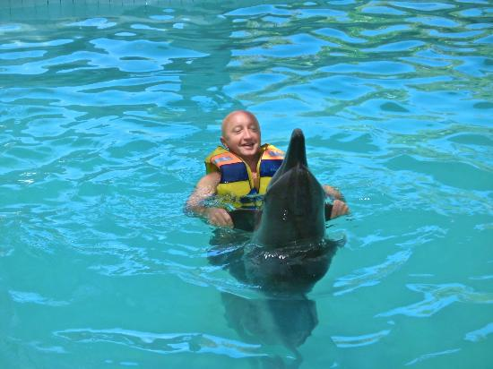 Melka Excelsior Resort Hotel: Swimming with dolphins