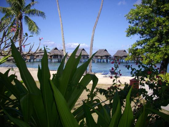 Sofitel Moorea Ia Ora Beach Resort: A lagoa em frente ao bangalô