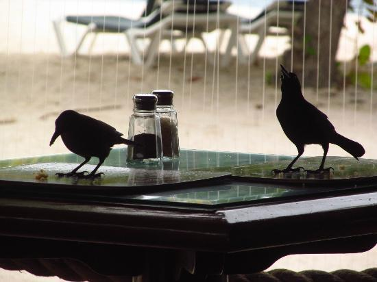 Palm Island Resort & Spa: breakfast friends