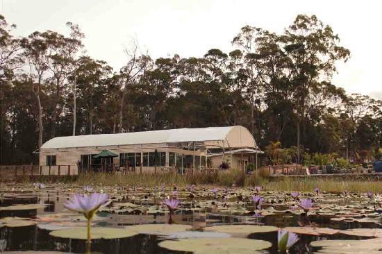 Abundance Cafe and Garden Centre