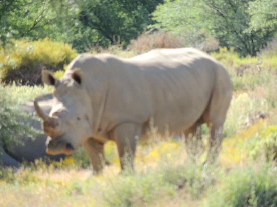 White Lion Lodge: rhino safari