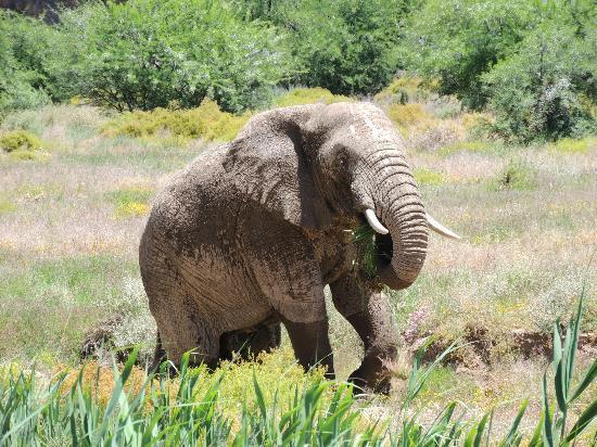 White Lion Lodge: elephant safari 