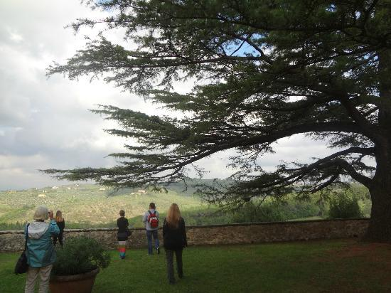 Tuscan Wine Tours with Angie: view